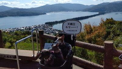 天橋立傘松公園股のぞき(12)
