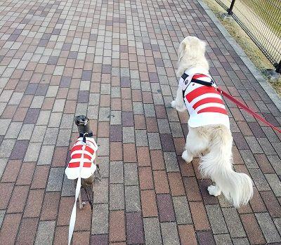 ラグビー日本代表公式ジャージ犬用10