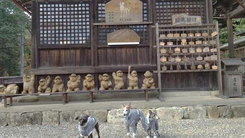 大滝神社イタグレ