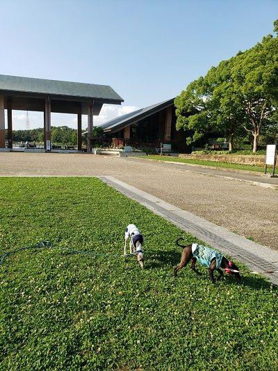 大泉緑地公園2