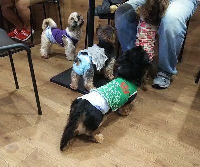 保護犬カフェ堺7
