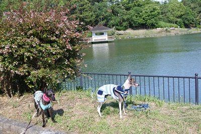 大泉緑地公園6