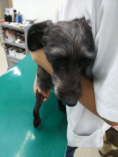 ワクチン狂犬病5