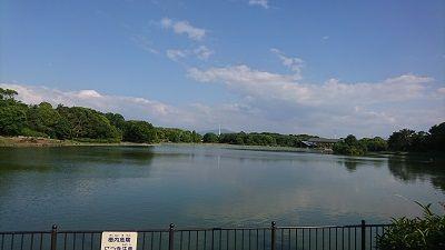 大泉緑地公園4