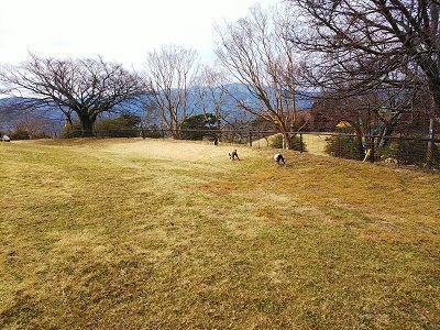 黒沢牧場ドッグラン5