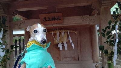 大瀧神社犬上神社 (1)