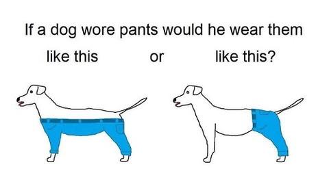 犬ズボン1