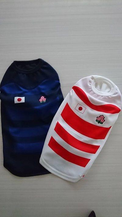 ラグビー日本代表犬服