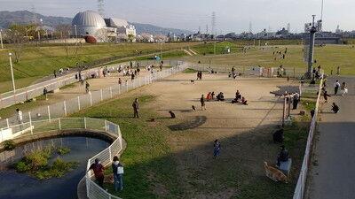 花園中央公園イタグレ3