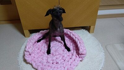 ハンドメイド犬用ベッド (3)