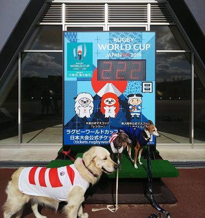 ラグビー日本代表公式ジャージ犬用7