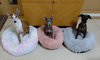 犬用ベッド (2)