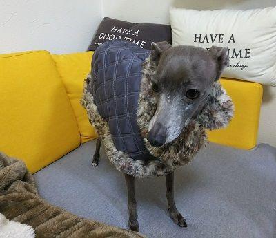 犬服コート5