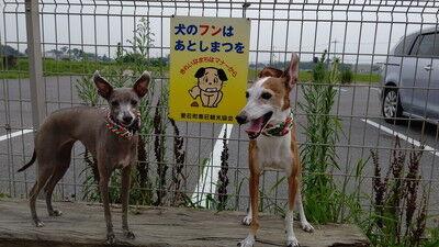 湖東三山ドッグラン (2)
