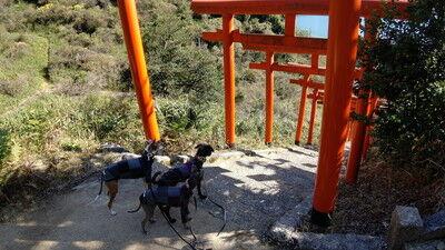 獅子崎稲荷神社 (8)