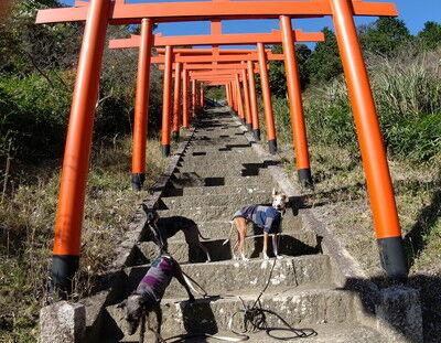 獅子崎稲荷神社 (7)