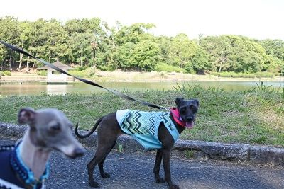 大泉緑地公園8
