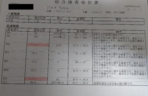 イタグレ_ジェイ_健康診断4