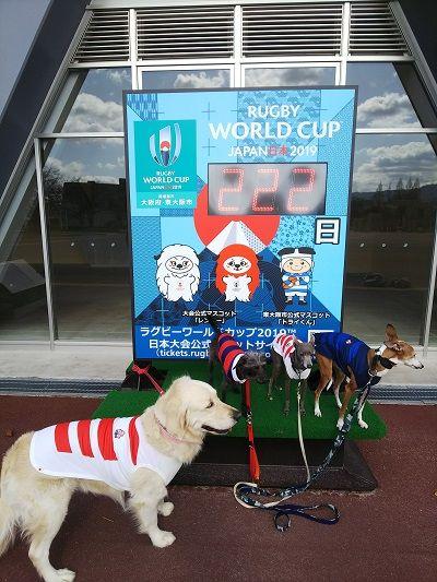 ラグビー日本代表公式ジャージ犬用5