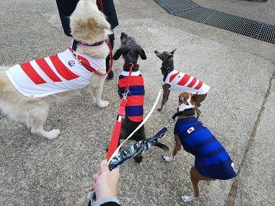 ラグビー日本代表公式ジャージ犬用9