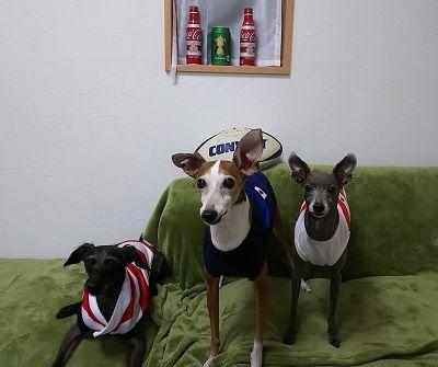 ラグビー日本代表犬用公式ジャージ2