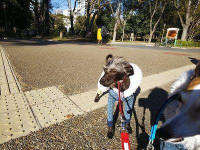 靭公園散歩5