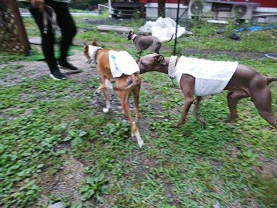 roverdogrun (4)