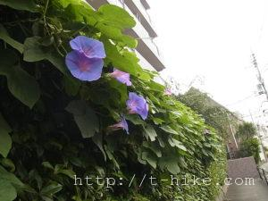RIMG0177