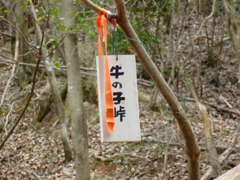 竜王O (480x360)