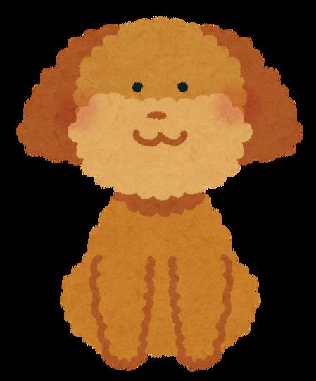 toypoodle_brown