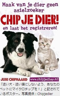 JBpress野良犬野良猫オランダ4
