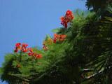 赤い花(シーライフパーク)