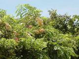シャワーツリー2