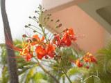 赤い花(ビーチへ行く道)
