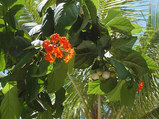 赤い花(実付き)