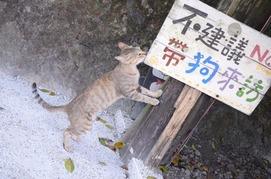 20121019-cat-30