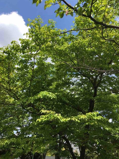 数へ日の声こぼしゐる雀の木  山尾玉藻