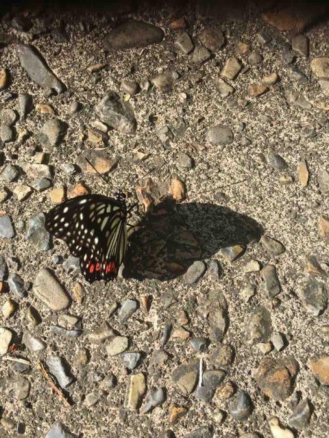 いつ影と入れ替りしや夏の蝶 仲 寒蟬
