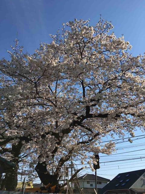 余花といふ華やぎのあり八十路なり   鍵和田 秞子
