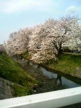 枝〜垂れ桜もキレイだな!♪はいッ!