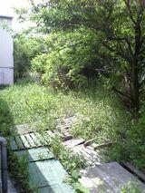 草狩り − 2