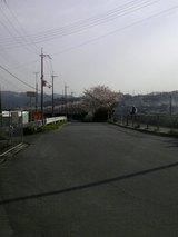 石川 桜 1