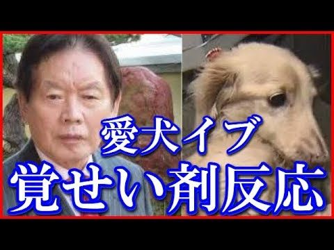 変死した紀州のドン・ファンこと野崎幸助の愛犬イブちゃんから覚醒剤成分反応が!!!【プチ衝撃】