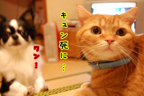 0305犬とネコ.jpg
