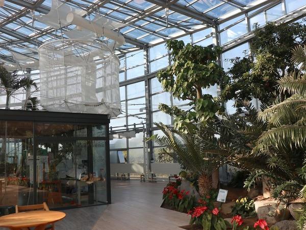 氷見市海浜植物園 (12)