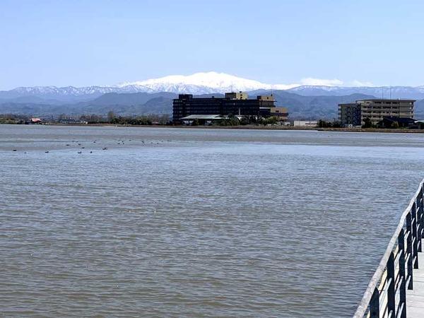 柴山潟 (2)