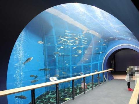 琵琶湖博物館 (28)