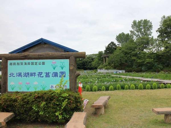 北潟湖 (3)
