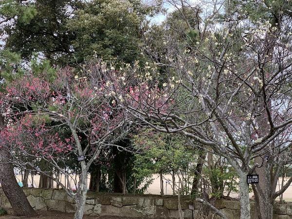 芦城公園 (3)