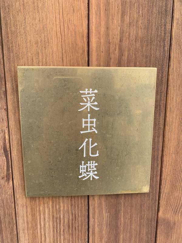 菜虫化蝶 (8)